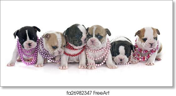 free art print of puppies french bulldog puppies french bulldog in