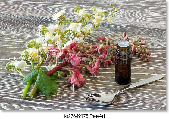 Free art print of bach flower remedies of red and white chestnut free art print of bach flower remedies of red and white chestnut mightylinksfo