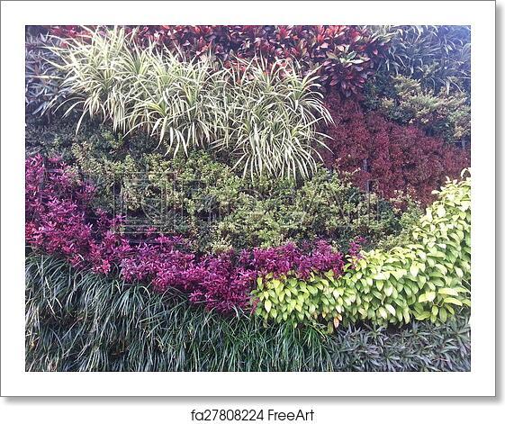 Free Art Print Of Vertical Garden Wall Texture