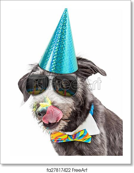 Closeup Photo Of A Funny Terrier Dog Wearing Birthday Party Hat And Bow Tie Licking Frosting Off His Face While Sunglasses With Reflection