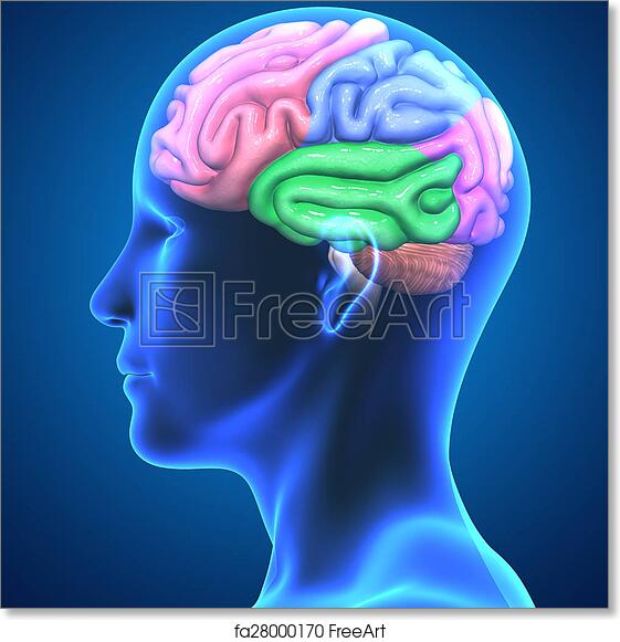 Free art print of brain parts the human brain has many properties free art print of brain parts ccuart Images