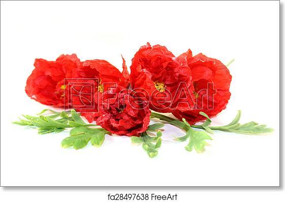 Free art print of iceland poppies red iceland poppy flowers on a free art print of iceland poppies mightylinksfo