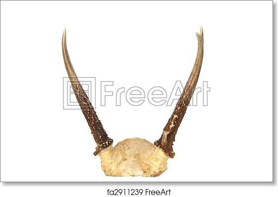 picture relating to Printable Deer Antlers identified as No cost artwork print of Spike Buck Deer Antlers