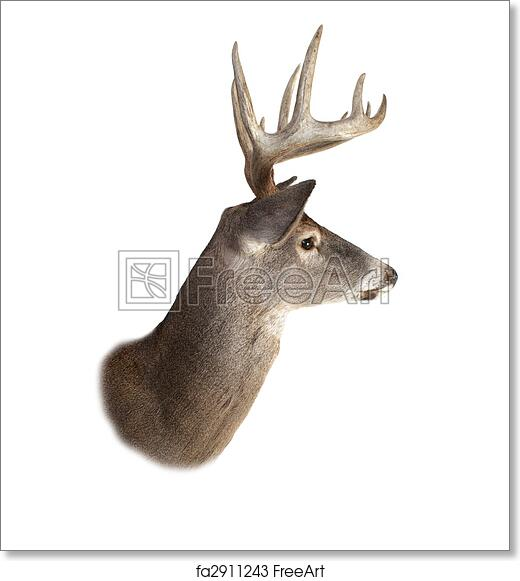 picture relating to Printable Deer Head called Absolutely free artwork print of Whitetail Buck Deer Intellect Profile
