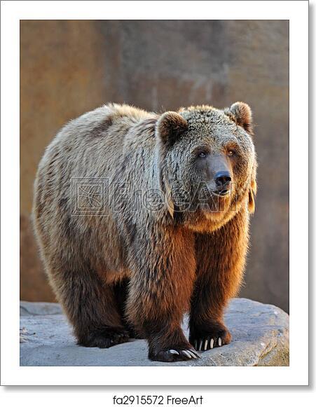 Free art print of Grizzly Bear Portrait. Portrait of a ...