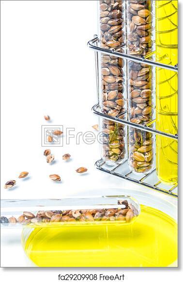 Free art print of Wheat genetically modified, Plant Cell, Petri Dish