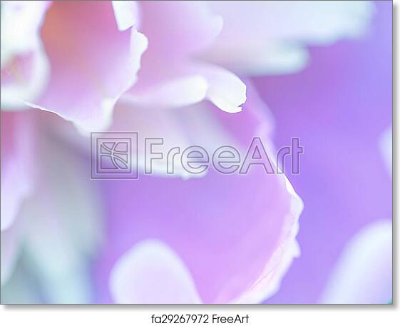Free Art Print Of Abstract Beautiful Gentle Spring Flower Background Closeup With Soft Focus Sweet Color