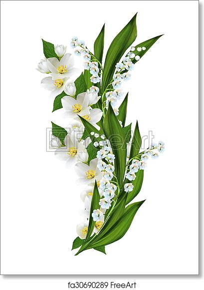 Free art print of Branch of jasmine flowers isolated on white background | FreeArt | fa30690289