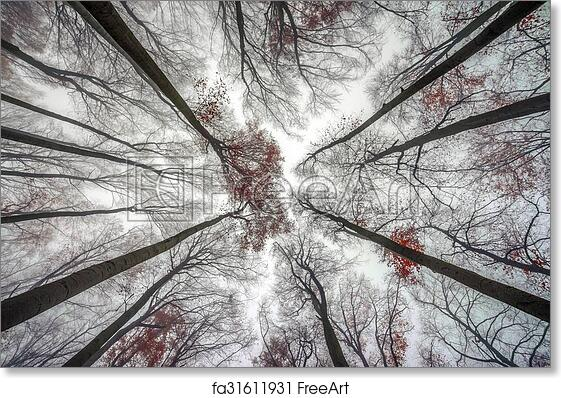 Free Art Print Of Mighty Trees Standing In The Enchanted Forest