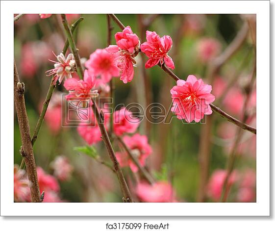 Free Art Print Of Chinese New Year Decoration Flower Peach Blossom