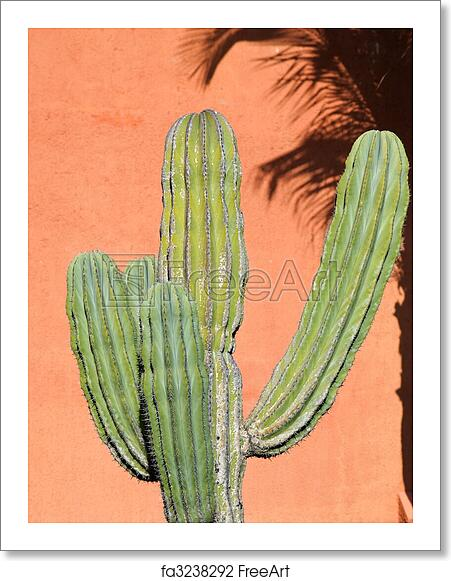 Free Art Print Of Desert Plants In A Vacation Resort In Los Cabos