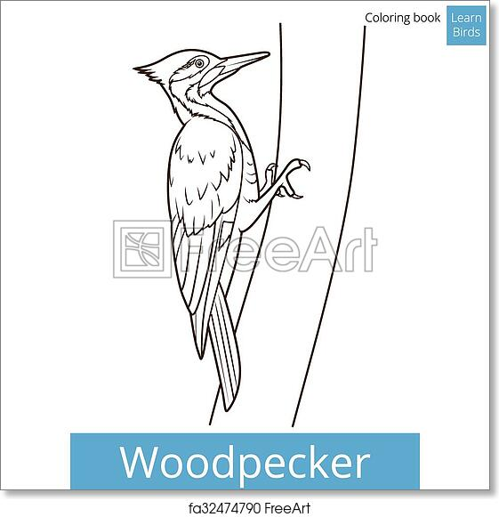 - Free Art Print Of Woodpecker Bird Learn Birds Coloring Book Vector.  Woodpecker Bird Learn Birds Educational Game Coloring Book Vector  Illustration FreeArt Fa32474790