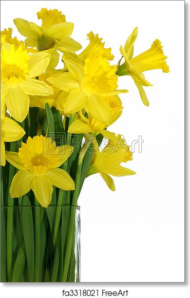 Free Art Print Of Daffodils In A Square Glass Vase Daffodils In A