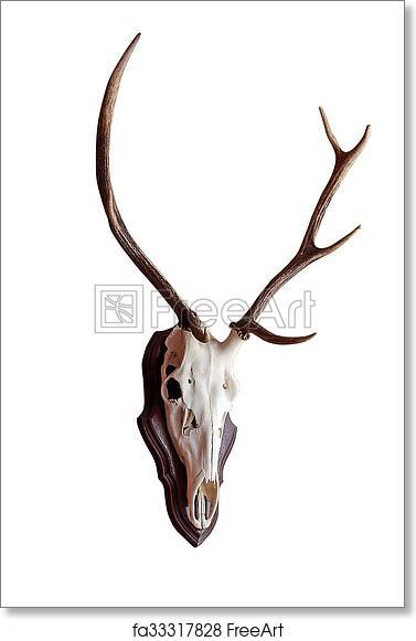 picture regarding Printable Deer Antlers named Absolutely free artwork print of Skull deer antlers isolated