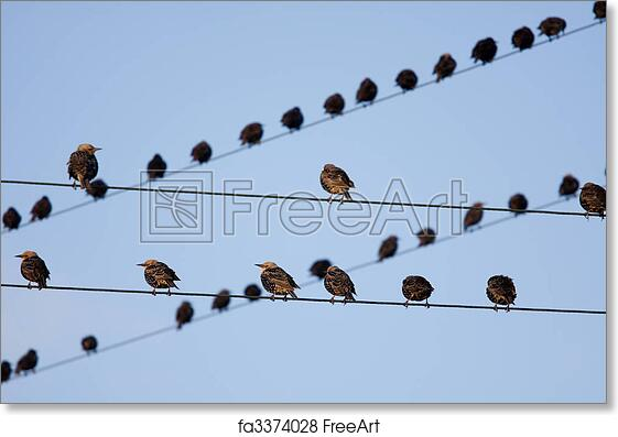 Free Art Print Of Bird On A Wire Birds On Telephone Lines Gathered