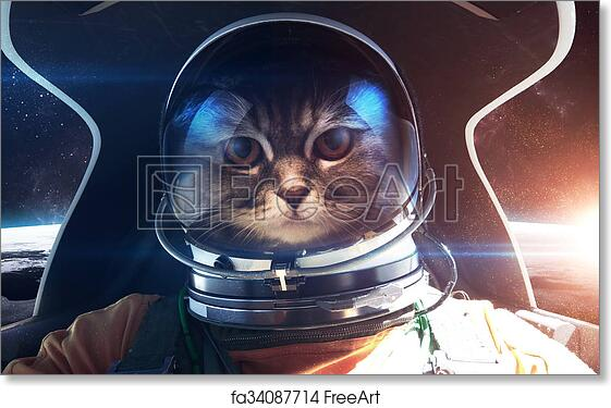 Free Art Print Of Brave Cat Astronaut In The Spaceship Cabin This Image Elements Furnished By NASA