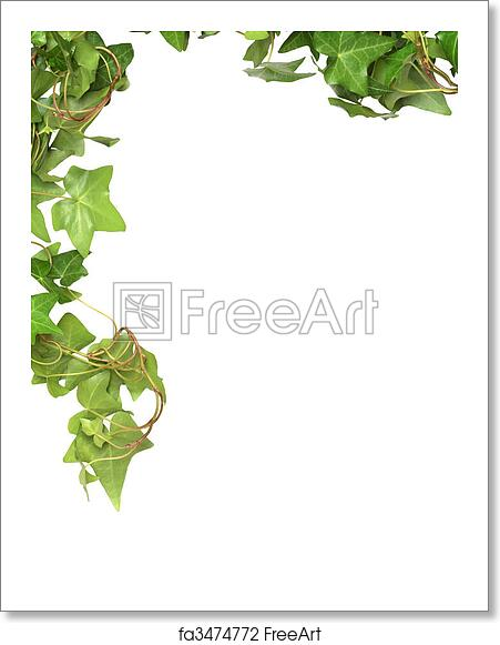 free art print of ivy border nice green ivy isolated on white