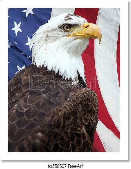 Free Art Print Of American Eagle American Bald Eagle With An