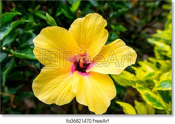 Free art print of yellow flower yellow flower in hong kong with free art print of yellow flower mightylinksfo