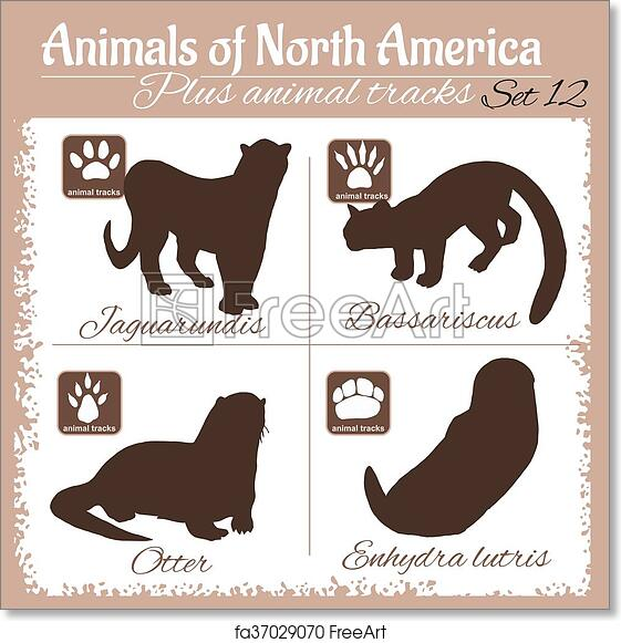 graphic relating to Printable Animal Tracks named No cost artwork print of North The usa pets and animal tunes, footprints.