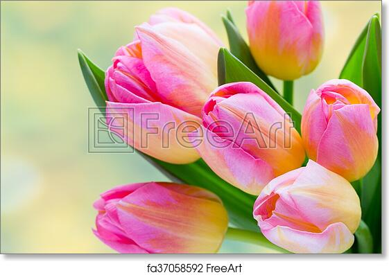 Free art print of spring flowers tulip bouquet on the bokeh free art print of spring flowers tulip bouquet on the bokeh background mightylinksfo
