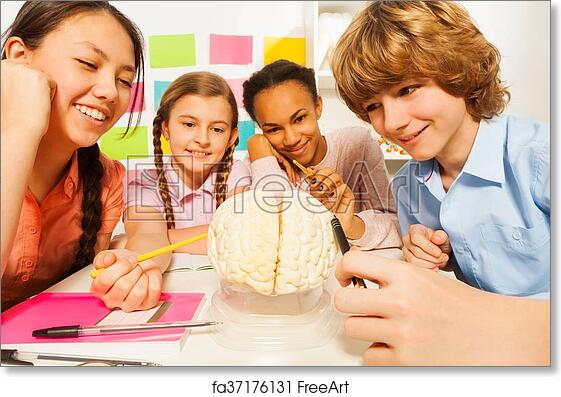 Free art print of Multi ethnic students studying anatomy at class ...