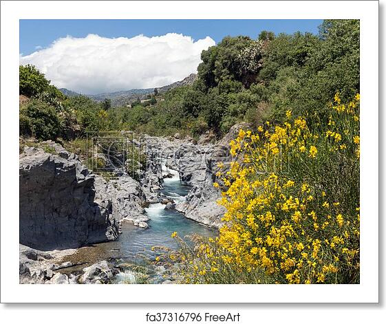 Free Art Print Of Alcantara Gorge With Yellow Broom Flowers At