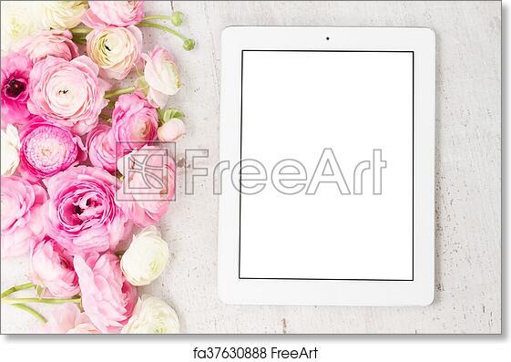 Free art print of pink and white ranunculus flowers pink and white free art print of pink and white ranunculus flowers mightylinksfo