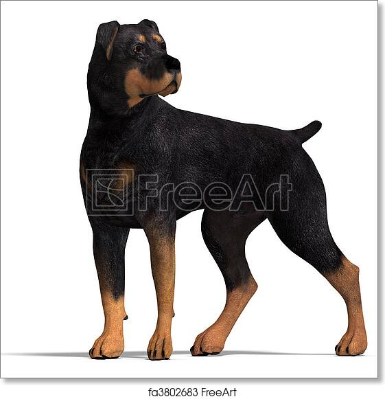 Free art print of Rottweiler Dog  3D rendering with clipping path and  shadow over white