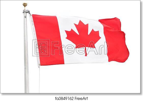 Free Art Print Of Canadian Flag Flag Of Canada Isolated On A White