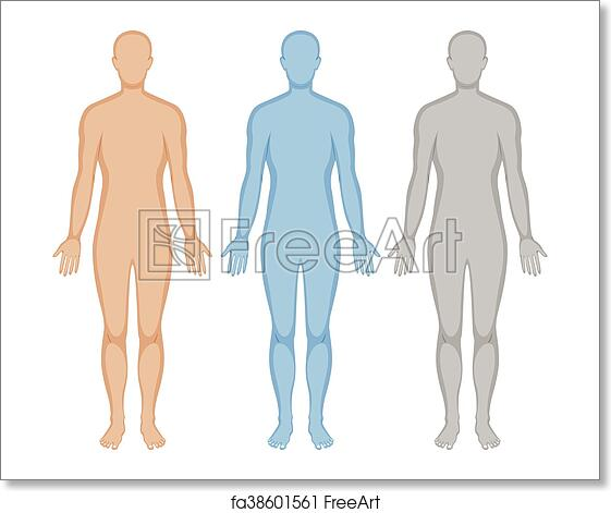 Free Art Print Of Human Body Outline In Three Colors Human Body