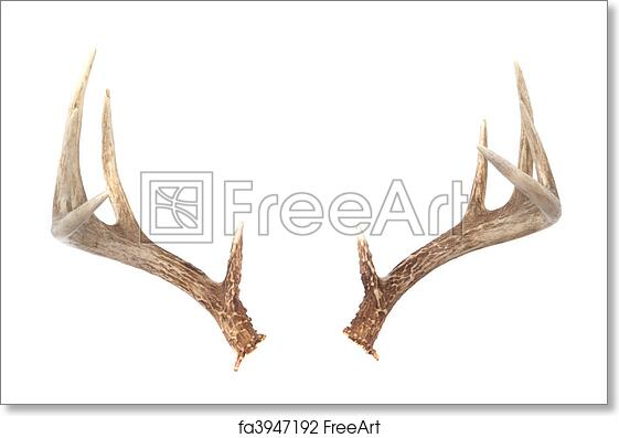 graphic regarding Printable Deer Antlers named Free of charge artwork print of Whitetail Deer Antlers
