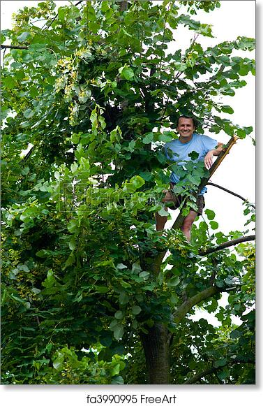 Free Art Print Of Man Climbed In A Tilia Tree