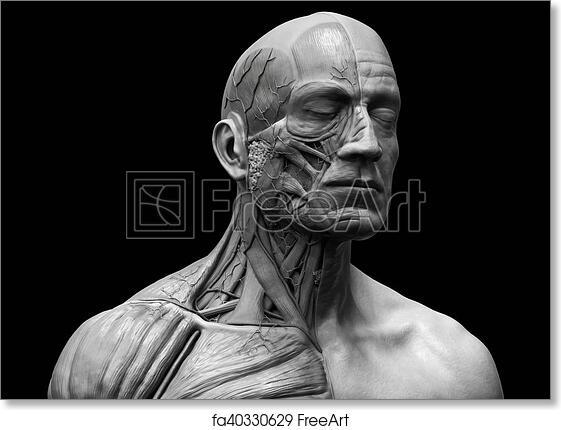 Free Art Print Of Human Body Anatomy Of A Man Human Anatomy