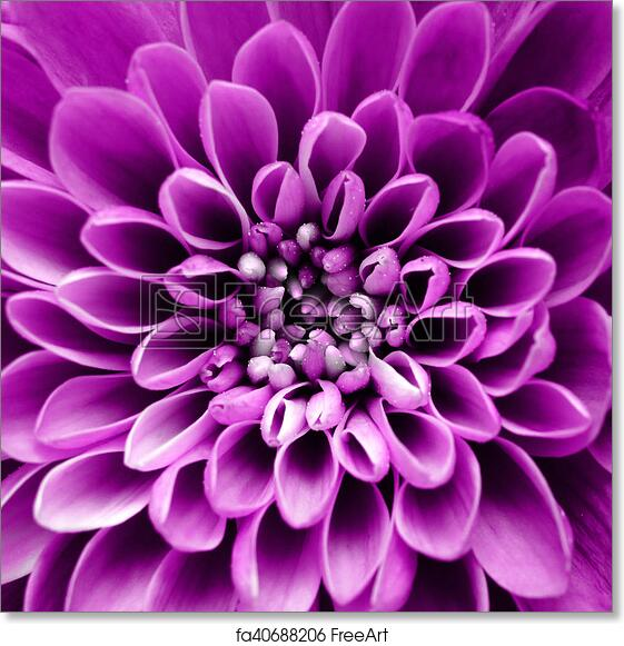 Free Art Print Of Macro Of Purple Flower Background Macro Of Purple