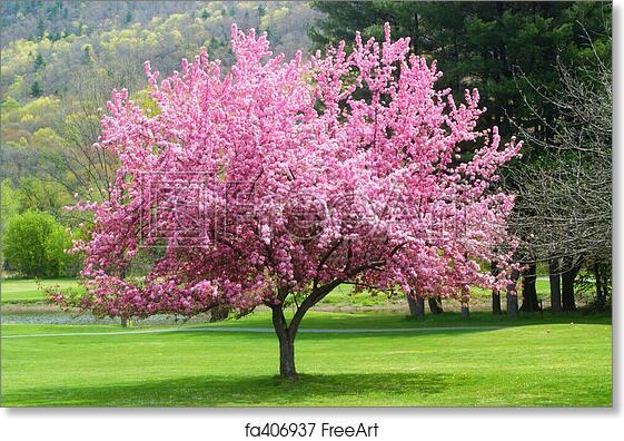 Free art print of pink flowering tree pretty pink flowering tree in free art print of pink flowering tree mightylinksfo