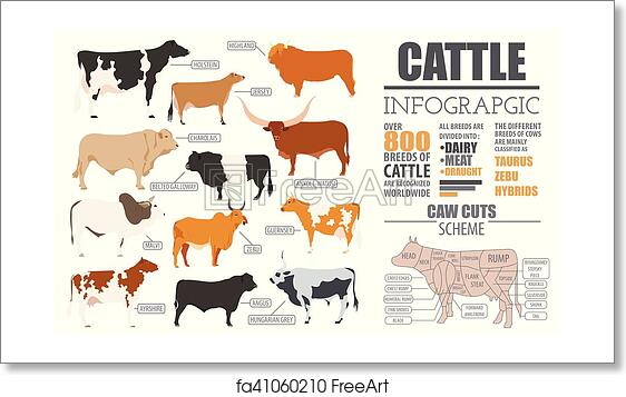 Free art print of Cattle breeding infographic template  Flat design