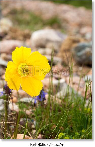 Free art print of yellow poppies yellow poppies a herbaceous plant free art print of yellow poppies mightylinksfo