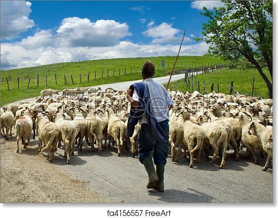 Free art print of Shepherd with his sheep herd