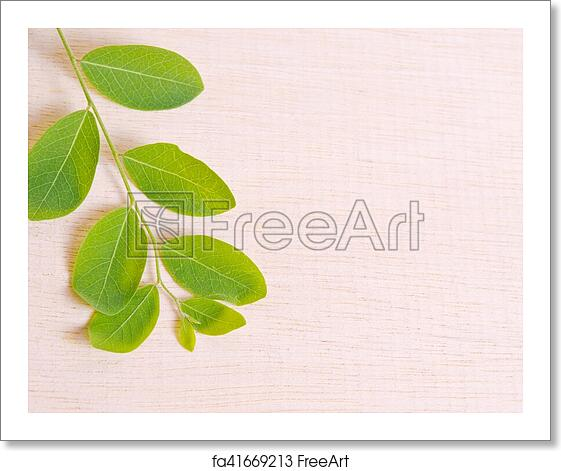 free art print of moringa natural green leaf plant spreads over