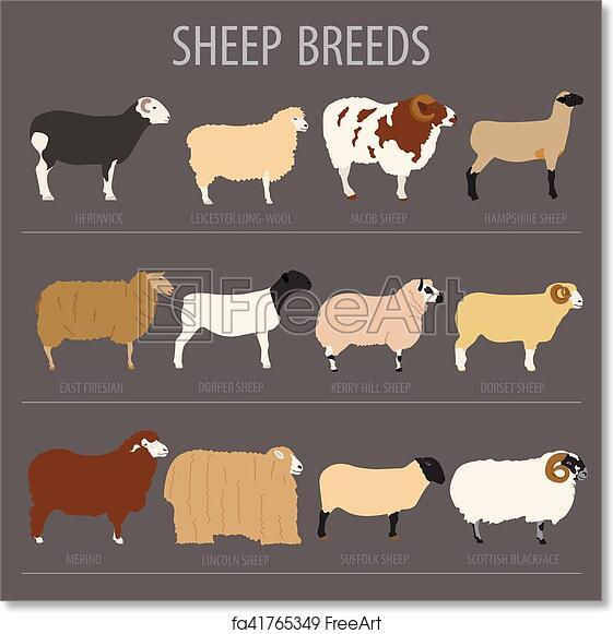Free art print of Sheep breed icon set  Farm animal  Flat design