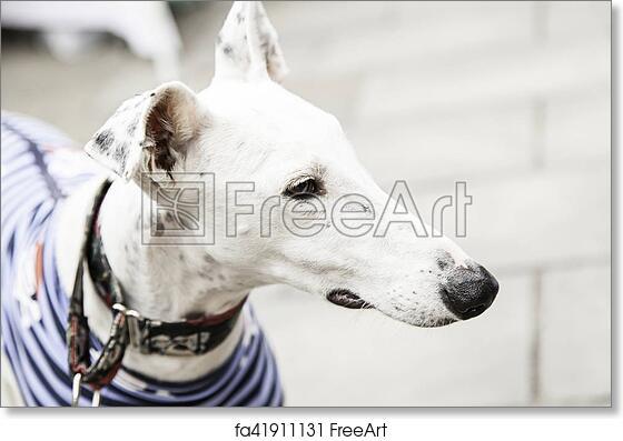 Greyhound dog lying Greyhound dog Greyhound print Greyhound watercolor Greyhound Greyhound watercolor art print