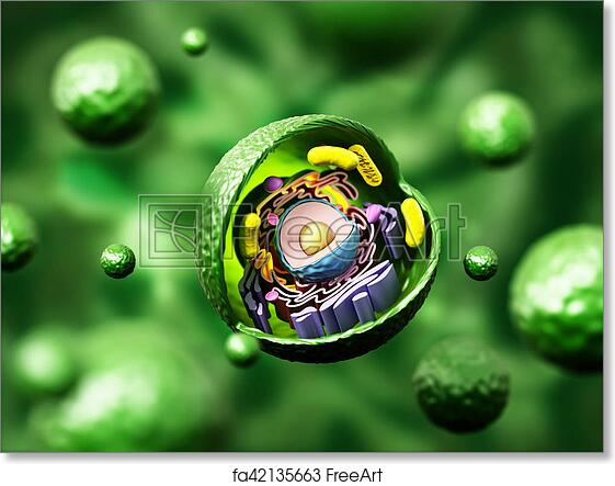 Pleasing Free Art Print Of Animal Cell Anatomy On Green Background 3D Wiring 101 Mecadwellnesstrialsorg