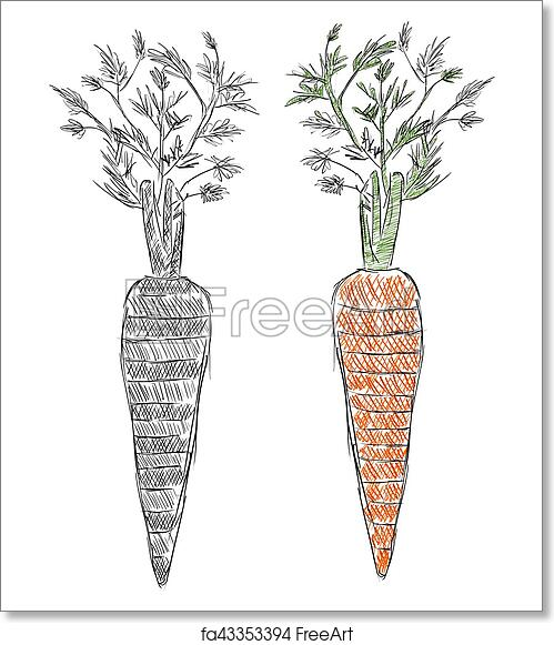 Free Art Print Of Dibujo A Mano Alzada De Zanahoria Alimentos Organicos Ilustracion Del Estilo Del Bosquejo Freeart Fa43353394 Pero evoluciono a ser una zanahoria :d. free art print of dibujo a mano alzada de zanahoria alimentos organicos ilustracion del estilo del bosquejo