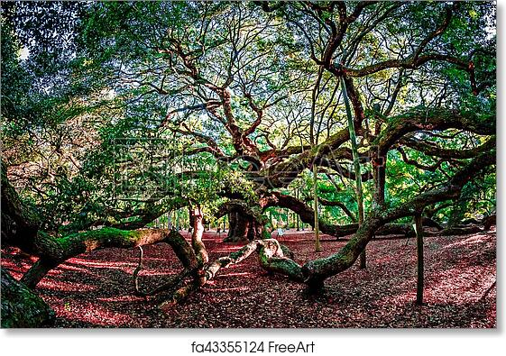 Free art print of Angel Oak Tree on John's Island South Carolina