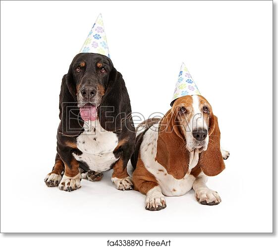 Free Art Print Of Basset Hound Dogs Wearing Birthday Hats Weating With Paw Prints