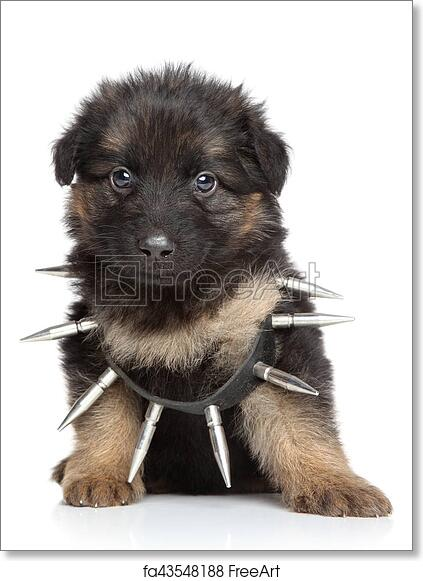 Free Art Print Of German Shepherd Puppy In Dog Collar German