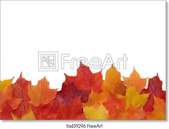 photo regarding Printable Fall Leaves identify No cost artwork print of Drop leaf border