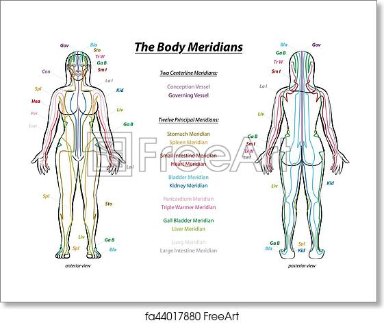 Free art print of Meridian System Description Chart Female Body. MERIDIAN  SYSTEM CHART - Female body with principal and centerline acupuncture  meridians - anterior and posterior view - Traditional Chinese Medicine.    FreeArt   fa44017880FreeArt
