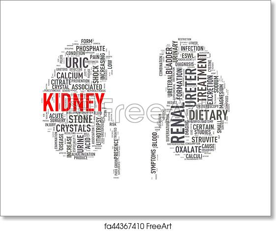 Free art print of Kidney shape wordcloud wordtag